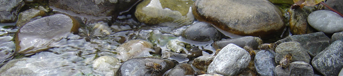 http://www.mueller-rosenau.ch/uploads/images/headerimage/wasser.jpg
